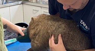 MTC Facility in Australia Raises Money to Help Animals Impacted by Bushfires