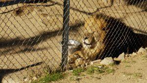 Sierra Zoo