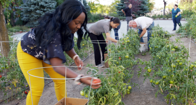 Green Thumbs at Corporate Office Support Local Families in Need of Food